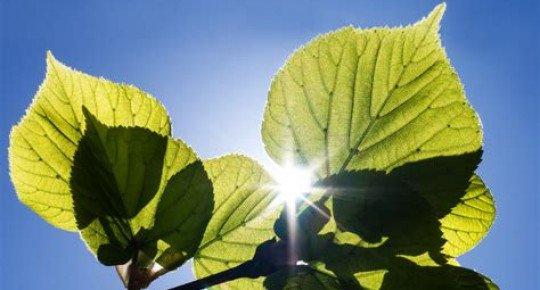 la vie des plantes… coup d'œil rapide sur la photosynthèse